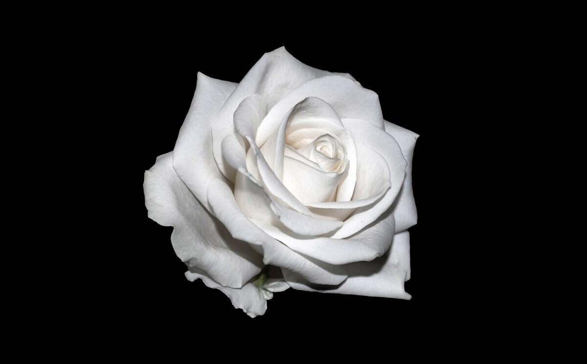Dauerausstellung Weiße Rose wiedereröffnet